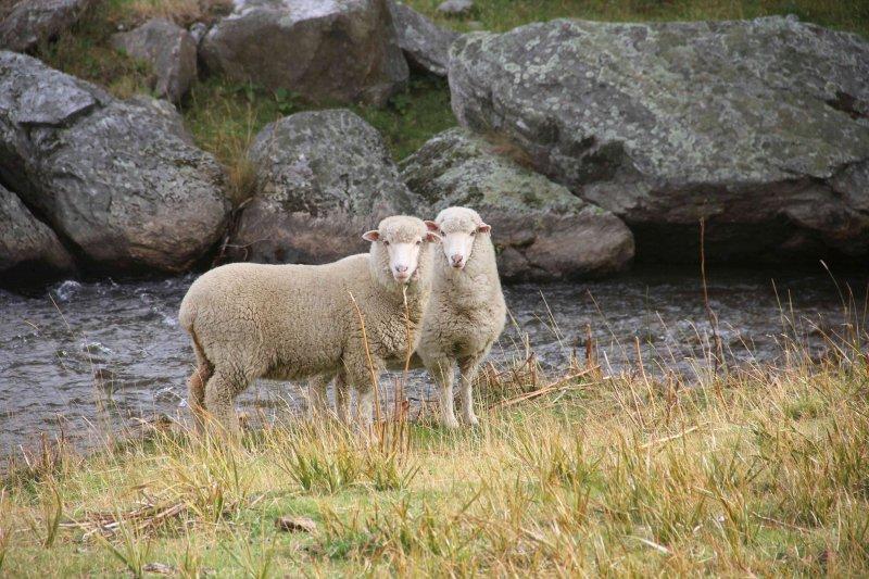 NZ-Southland0548.jpg